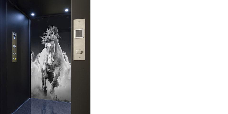 Lift 2b - verolift liftpersonalisatie-paard kopiëren